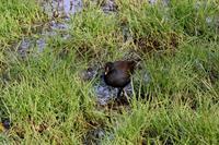 T池にて - 鳥撮りDAIRY