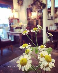 〜おめでとう〜♬ -  Flower and cafe 花空間 ivory (アイボリー)