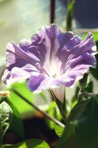 12.23 - anemone