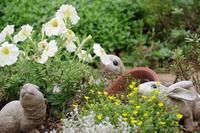 小さなローズガーデンの12か月・・7月 - 季節の風を追いかけて