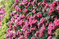 グラスハウスの壁面花壇を彩る植物 - 神戸布引ハーブ園 ハーブガイド ハーブ花ごよみ