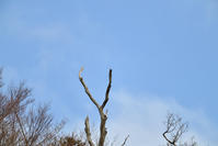 プチ遠征 - 今日も鳥撮り