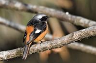 冬枯れの枝にとまる鳥さん - 鳥と共に日々是好日