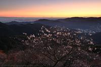 桜山公園 冬桜と紅葉 日の出 - photograph3