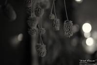 """dried flower"" - ~まきち写真工房~"
