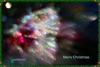 Merry Christmas - 花鳥風猫ワン