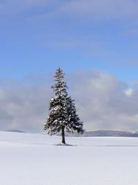 クリスマスツリーの木とメリークリスマス - My favorite ~Diary 3~