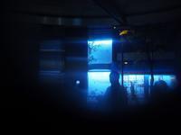 銀座の夜をカメラ散歩 - 好きな写真と旅とビールと