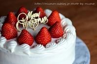 クリスマスケーキとプレゼントキタ━o(゚∀゚o)(o゚∀゚o)(o゚∀゚)o━!! - 森の中でパンを楽しむ