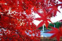 冬紅葉 - 『私のデジタル写真眼』
