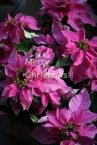 Merry Merry Christmas!! - ハーブのある暮らし