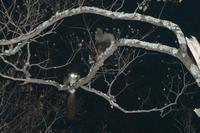 18年冬の自然(7)……ムサぴょん探索3回目(その3) - ふぉっしるもしてみむとてするなり