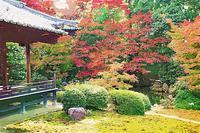 京都 随心院の紅葉 2 - 光 塗人 の デジタル フォト グラフィック アート (DIGITAL PHOTOGRAPHIC ARTWORKS)