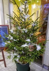 12/24  Merry Christmas !! - chou-chou-de-robeブログ