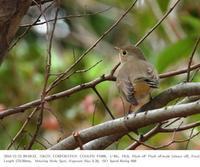 2018.12.23(1) - 鳥撮り遊び