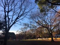 砧公園で朝散歩 - ミニチュアブルテリア ダージと一緒3