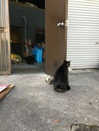 猫の手、ありがとう - gin~tetsu~nosuke