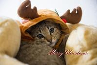 Merry Christmas - *花音の調べ*