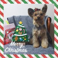 Merry Christmas - りりぃ達といっしょ+りお