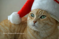 MERRY CHRISTMAS - kotekotetonton+