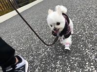 デビュー!! - 深部に響く指圧マッサージ 「SHIATSU-YA」