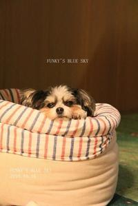 「眠いンですけど~~~」と、今日も「メリー・クリスマス♪」 - FUNKY'S BLUE SKY