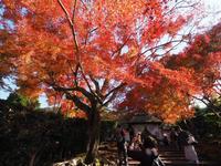 京都の秋を楽しみました。 ~ 安楽寺・法然院 ~ - ご無沙汰写真館