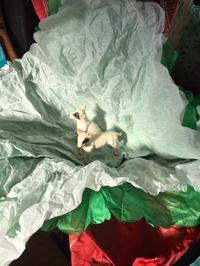 メリークリスマス●台湾からのプレゼント - ミニチュアブルテリア ダージと一緒3