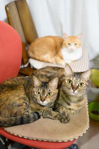 椅子をとられる - 猫と夕焼け