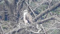 奥多摩むかし道 - 山と鳥を愛するアナパパ