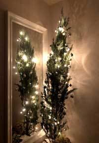 名残惜しいクリスマスの晩 - Lazygardener