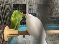 野菜をパクパク♪ - つれづれ日記