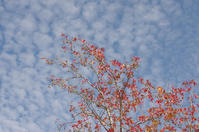 姫路城周辺にて(2018/11/18)其の③ - 南の気ままな写真日記