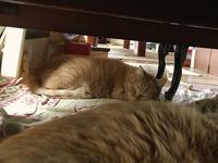 猫と川の字で寝る - もるとゆらじお