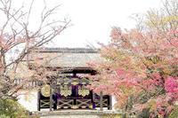 京都 醍醐寺の紅葉 2 - 光 塗人 の デジタル フォト グラフィック アート (DIGITAL PHOTOGRAPHIC ARTWORKS)