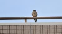 青梅永山丘陵 - 山と鳥を愛するアナパパ