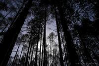 森の目覚め - フォトな日々