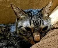 寒いわ - キジトラ猫のトラちゃんダイアリー