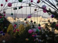 ☆年末のご挨拶☆ - 手柄山温室植物園ブログ 『山の上から花だより』