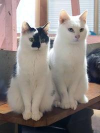 12月28日(金) 納めの日 - ほのぼの動物写真日記