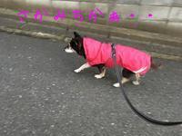自主的ジグザグ^^ - HAMAsumi-Life