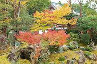 京都 醍醐寺の紅葉 3 - 光 塗人 の デジタル フォト グラフィック アート (DIGITAL PHOTOGRAPHIC ARTWORKS)