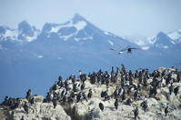パタゴニア(その2)-ビーグル水道の野鳥と動物 - oto-のPhoto Gallery