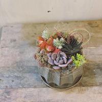 迎春多肉寄せ植え - さにべるスタッフblog     -Sunny Day's Garden-