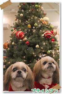2018年12月24日プチシアン薬師池公園 - 週末は、愛犬モモと永吉とお出かけ!Kimi's Eye