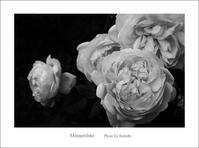 我が家のバラ - Minnenfoto