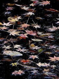 奥の池 - 四十八茶百鼠(2)