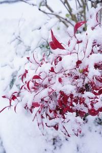 今冬初めての積雪 - お花に囲まれて