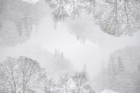 冬型の気圧配置 - たなぼた