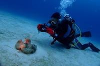 18.12.28寒波、キてます - 沖縄本島 島んちゅガイドの『ダイビング日誌』